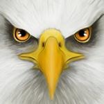 终极鸟模拟器